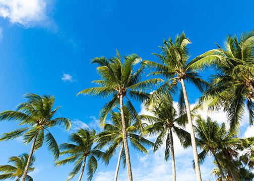 Palm trees in Palm Beach, Florida